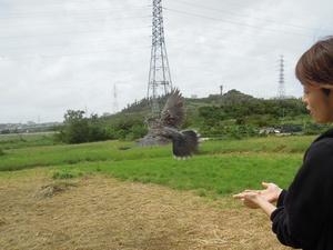 20130920_キジバト放鳥.jpg