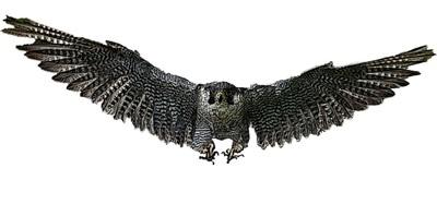 ノグチゲラ放鳥_5.jpg