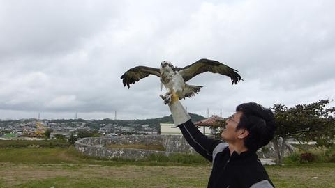20140103_ミサゴ放鳥.jpg