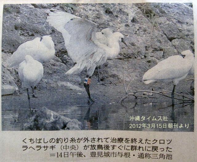 kurotsura.jpg